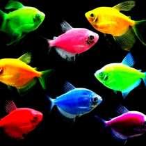 Аквариумны рыбки. Большой аасортимент. Самовывоз и доставка, в Челябинске
