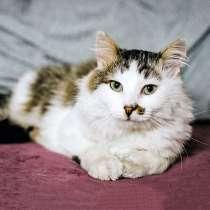 Невероятно любящий людей молодой котик Бакс ищет дом, в Москве
