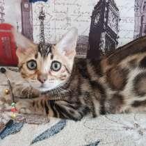 Продажа бенгальских котят, в Кирове