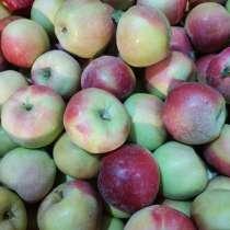 Яблоко Глостер 80 тонн, в Краснодаре