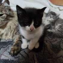 Котята, в г.Барановичи