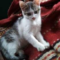 Котёнок с доставкой, кушает любую домашнюю еду, аккуратен, в г.Орша