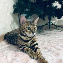 Передержка кошек, в Воронеже
