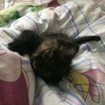 Котёнок в добрые руки. Возраст 2 недели; девочка, в Нижнем Новгороде