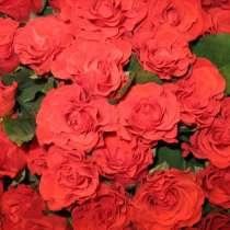 Срез для букетов (розы), в Ростове-на-Дону