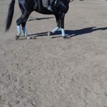 Конный спорт, верховая езда, в Улан-Удэ