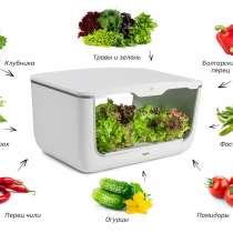 Цветы, зелень, ягода без ГМО всегда на столе, в Иркутске