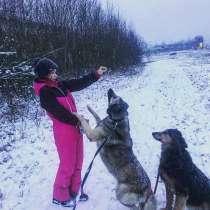 Выгул собак любых пород в Зеленограде, в Зеленограде