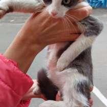 Котёнок в добрые руки, в Якутске
