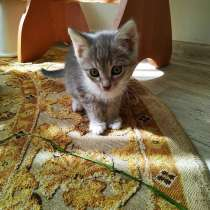 Котята в добрые руки, в Самаре