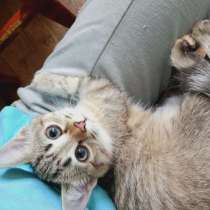 Котята, 3 месяца, в Дивногорске