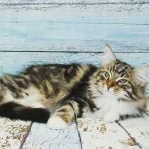 Сибирские котята из питомника Большая Радость, в Екатеринбурге
