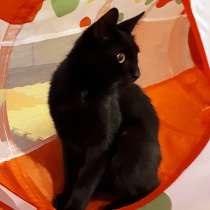 Милашка Бэмби, чудесный домашний котик в добрые руки, в Москве