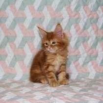 Котёнок в добрые руки, в Новосибирске