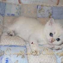 Британские золотые котята из питомника, в г.Алматы