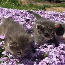 Отдадим котят в хорошие руки!, в г.Николаев