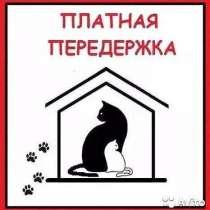 Передержка для ваших любимцев, в Архангельске