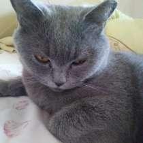 Пропала кошка, в Троицке