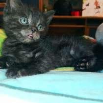 Котёнок, в г.Мариуполь