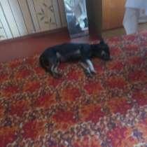 Нашли собачку, в г.Шымкент