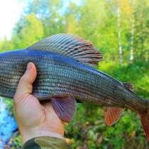 Рыбалка на хариуса по северным рекам, в Москве