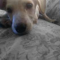 Милый щенок в ответственные руки)), в г.Бендеры