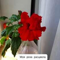 А, 57 лет, хочет пообщаться – Ищу друга, в г.Бишкек