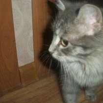 Кошечка - потеряшка, в Новотроицке