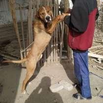 Продам собак, в г.Бухара