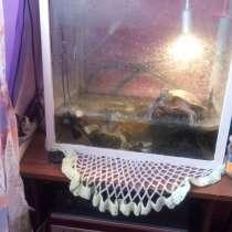 Продам водных красноухих черепах, в Вологде