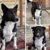 Собака Аннушка, в Анапе