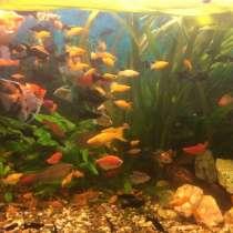 Аквариумные рыбки, в Нижневартовске
