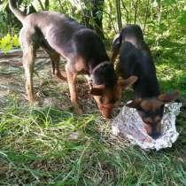 Брошенные в лесу молодые собаки ищут своего человека, в Балашихе