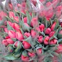 Тюльпаны оптом, в Наро-Фоминске