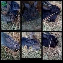 Продам кроликов, в г.Алматы
