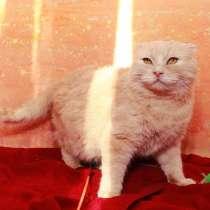 Шанс для Лёлика. Шотландский котик ищет дом, в Калуге