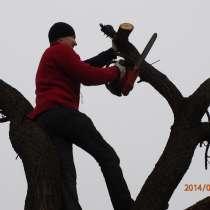 Спил обрезка деревьев, в Ростове-на-Дону