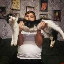 Продажа котят мейн-кун, в г.Белоозерск