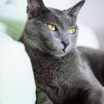 Ласковый кот ищет нового хозяина, в Мытищи