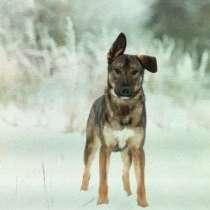 Чудесный щенок Элвин ждёт мамупапу, в Подольске