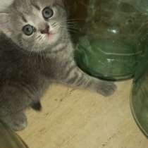 Продаю котят, в г.Витебск