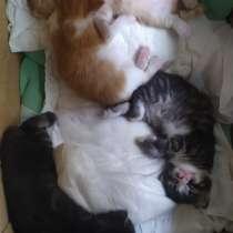 Котята в дар, в Смоленске