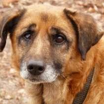 Чистые, Здоровые и Адекватные Собаки от Фонда ЗЖ, в г.Кокшетау