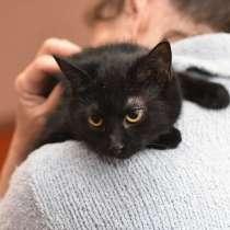 Кошечка Шанель ищет дом, в Домодедове