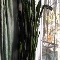 Отдам комнатные растения, в Симферополе