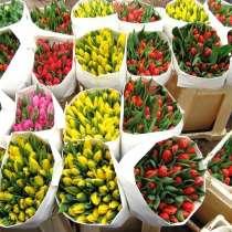 Голландские тюльпаны оптом, в Екатеринбурге