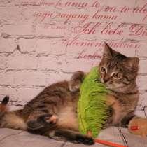 Вита - полосатенькая юная котенок кошечка ищет дом, в Москве