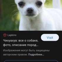Куплю щенка чихуахуа гладкошёрстного. До 5000 тысяч рублей, в Братске