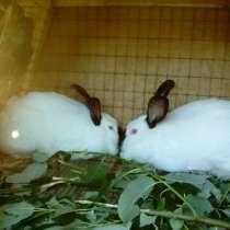 Кролики высокопородные, в Нижнем Новгороде