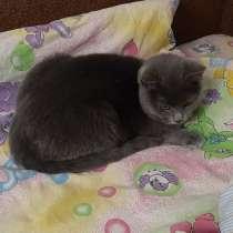 Британский котёнок, в г.Барановичи